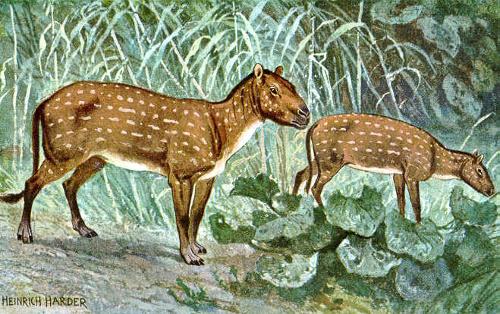 Hyracotherium oder auch Eohippus