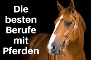 Die besten Berufe mit Pferden