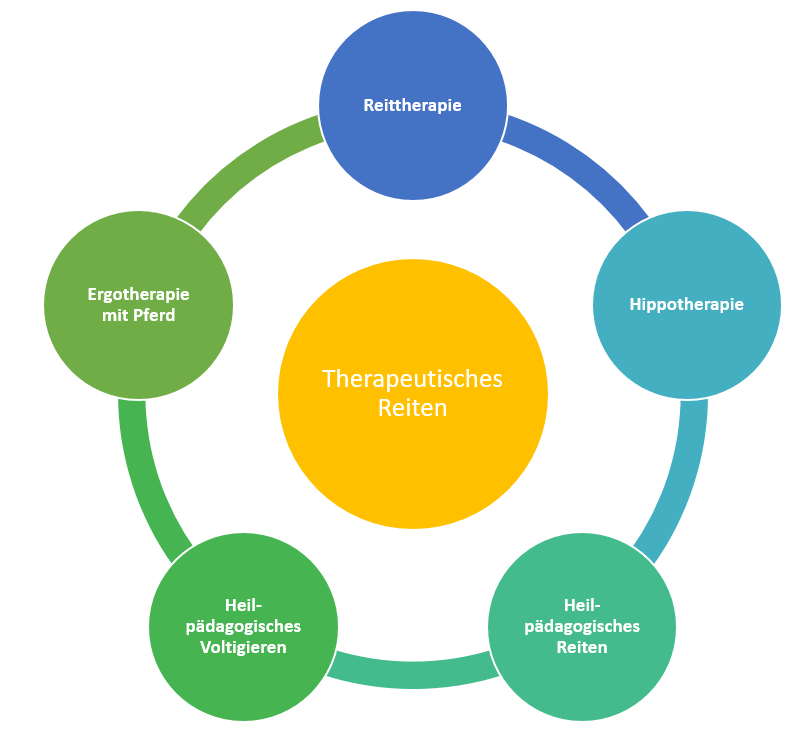 Bereiche des Therapeutischen Reiten