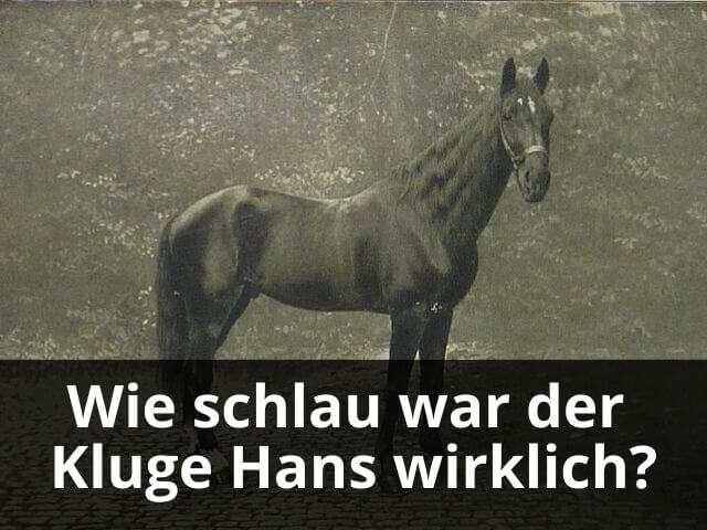 Wie schlau war der Kluge Hans wirklich?