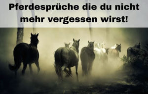 Die schönsten Pferdesprüche
