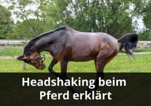 headshaking beim pferd erklärt