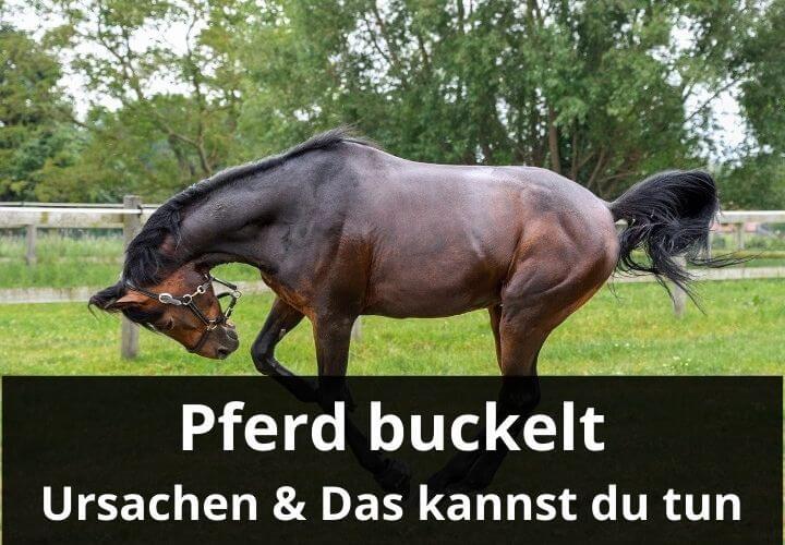 Pferd buckelt: Grüunde und was man tun kann
